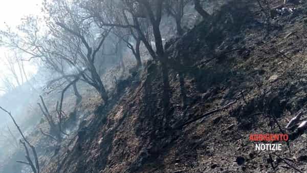 incendio caltabellotta-2