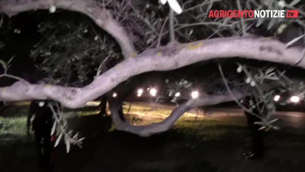 Lotta ai furti di uva e olive: maxi controllo dei carabinieri nelle zone rurali