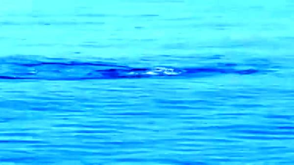 Lampedusa presa d'assalto dai delfini, che spettacolo in mare