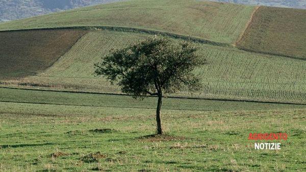 """""""Agricoltura biologica bene comune"""", dibattito con esperti al Chiostro della Chiesa del convento di Cianciana"""