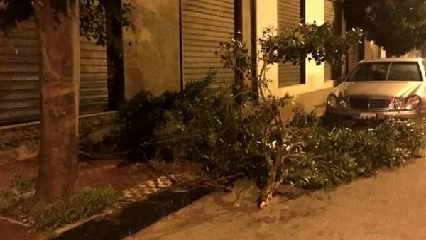 alberi caduti palma di montechiaro-2