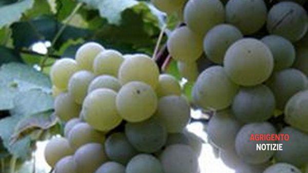 """Prodotti tipici, degustazioni e produttori: i due giorni della """"Festa dell'uva"""""""