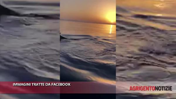 Delfini al largo di San Leone: i diportisti immortalano la spettacolare danza