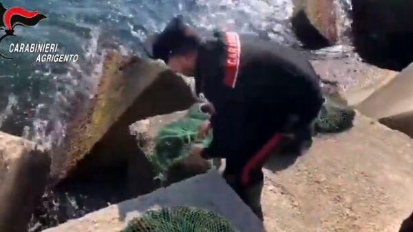 sequestro ricci di mare san leone3-2