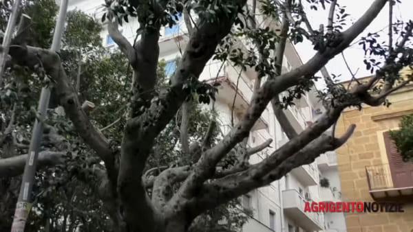 Protagonismo civico, gli esercenti finanziano la potatura degli alberi