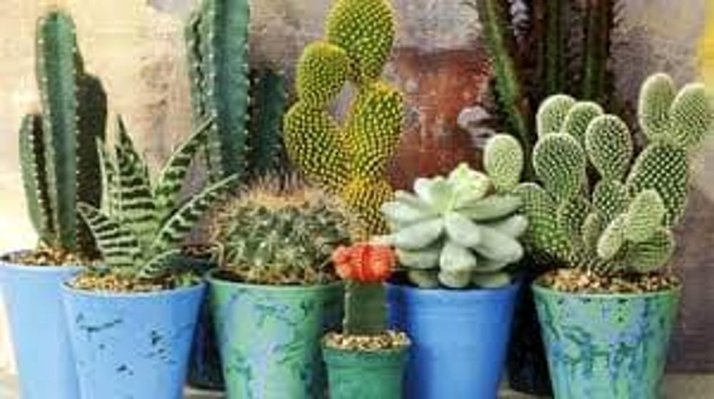 Come arredare gli interni di casa con le piante grasse for Arredare casa con le piante
