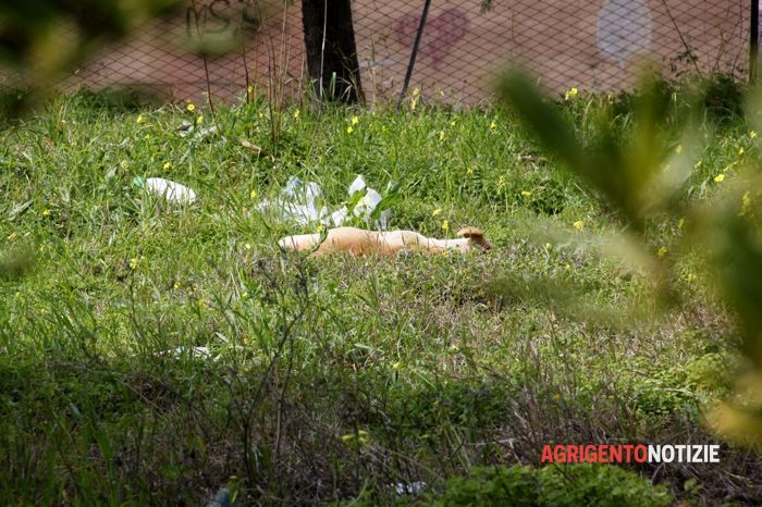 Villaggio Mosè, le carcasse dei cani ritrovate dalla polizia locale